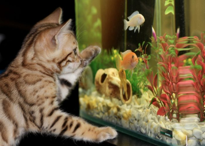 Kot przy akwarium